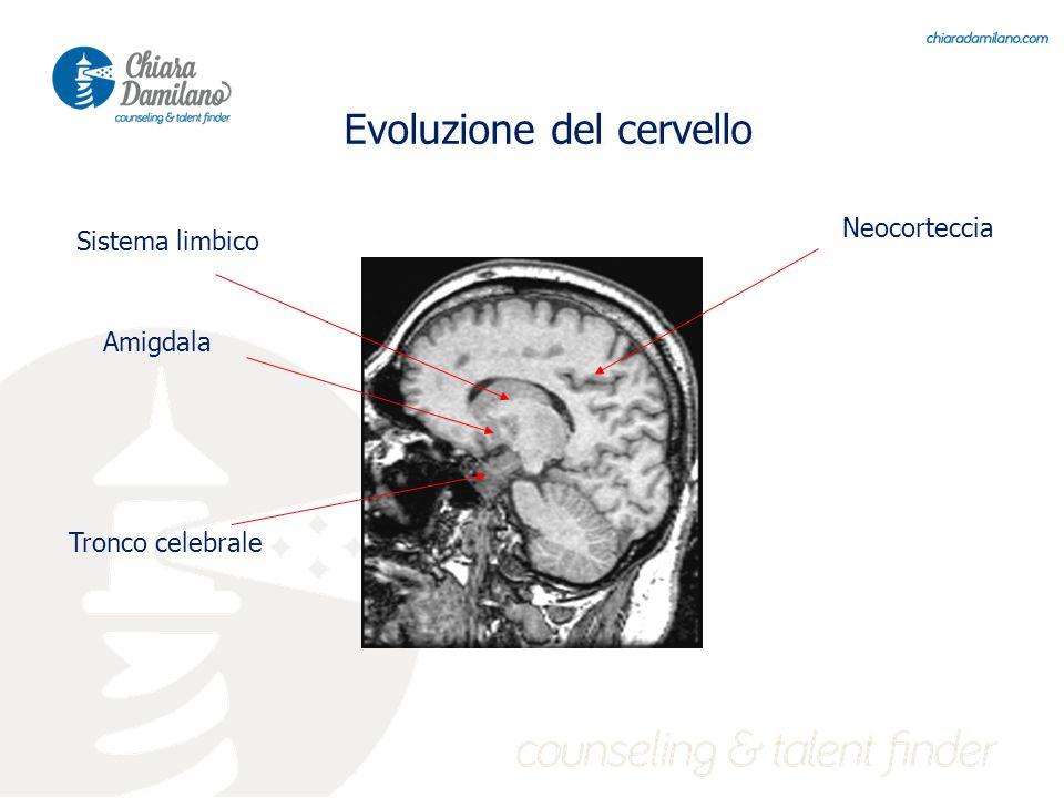 Tronco celebrale Sistema limbico Neocorteccia Evoluzione del cervello Amigdala