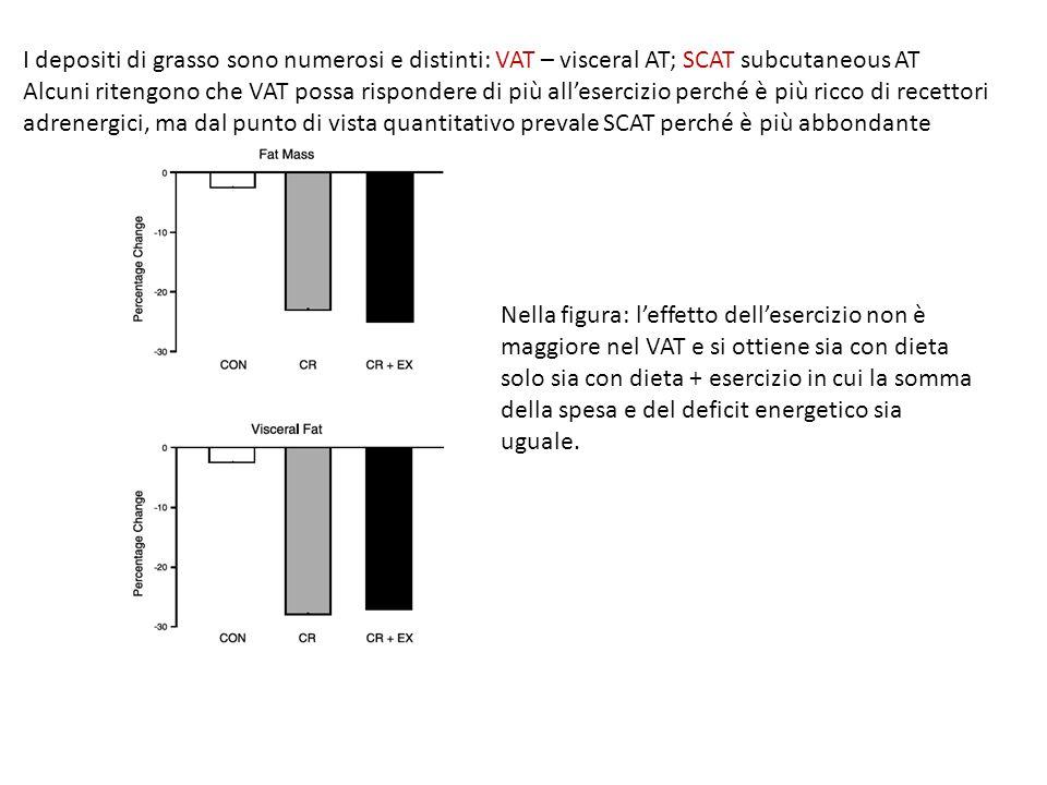 I depositi di grasso sono numerosi e distinti: VAT – visceral AT; SCAT subcutaneous AT Alcuni ritengono che VAT possa rispondere di più all'esercizio