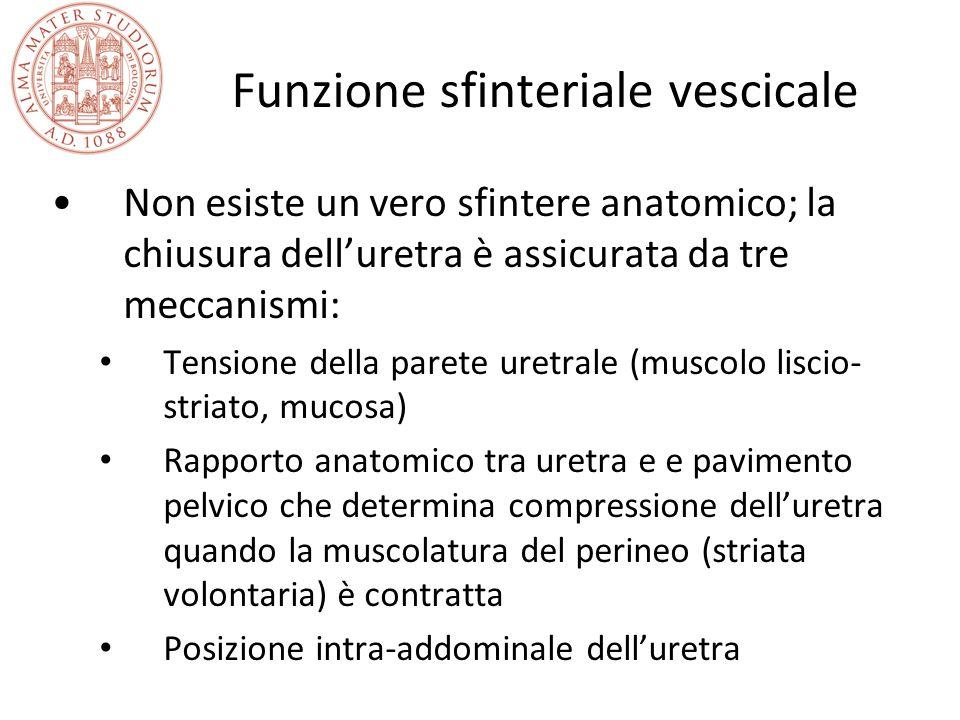 Funzione sfinteriale vescicale Non esiste un vero sfintere anatomico; la chiusura dell'uretra è assicurata da tre meccanismi: Tensione della parete ur