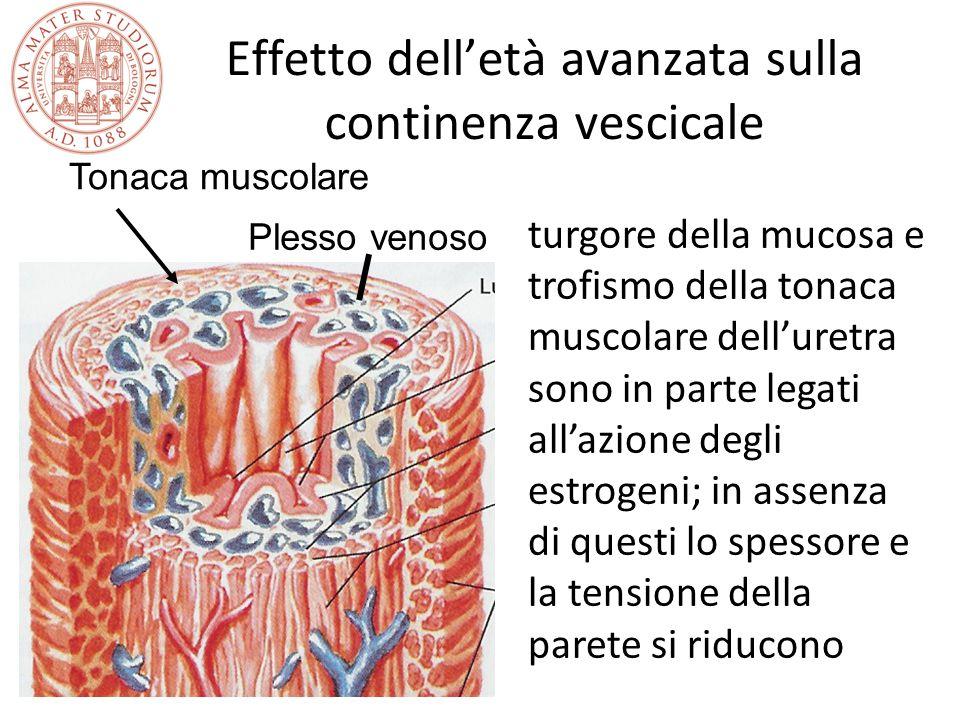 Effetto dell'età avanzata sulla continenza vescicale Plesso venoso Tonaca muscolare turgore della mucosa e trofismo della tonaca muscolare dell'uretra
