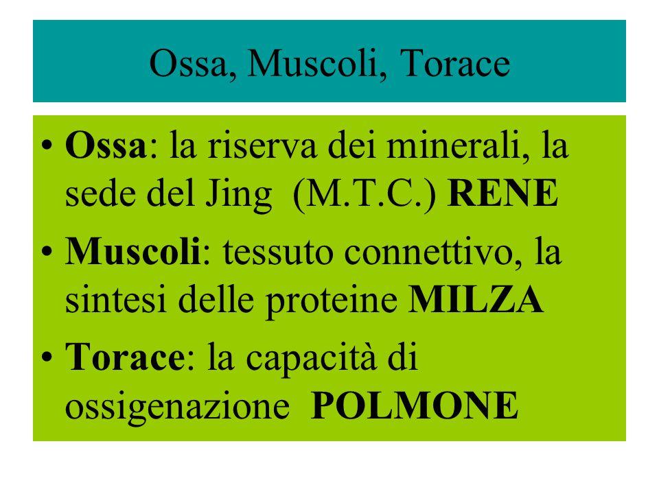 Ossa, Muscoli, Torace Ossa: la riserva dei minerali, la sede del Jing (M.T.C.) RENE Muscoli: tessuto connettivo, la sintesi delle proteine MILZA Torac