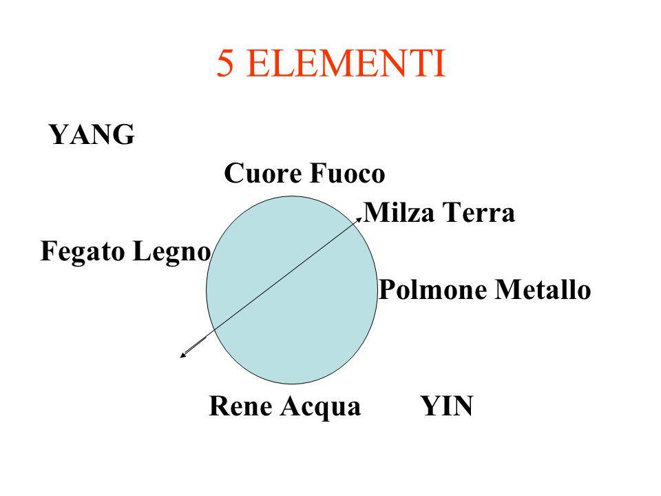 5 ELEMENTI YANG Cuore Fuoco Milza Terra Fegato Legno Polmone Metallo Rene Acqua YIN