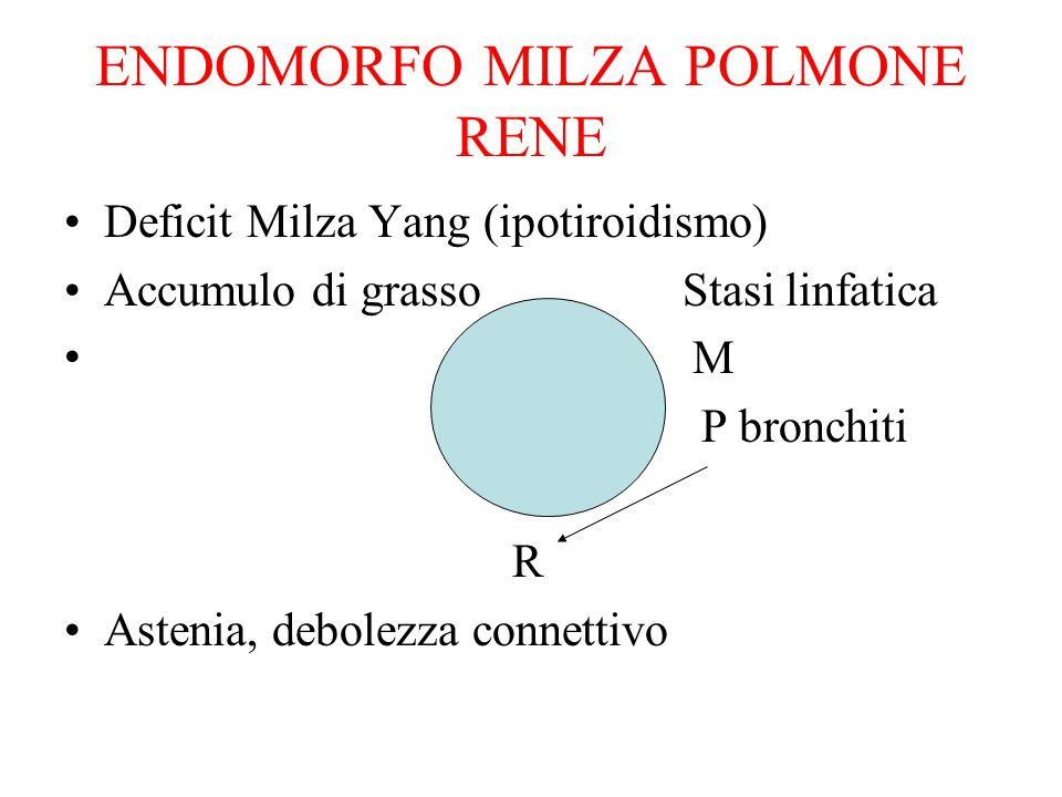 ENDOMORFO MILZA POLMONE RENE Deficit Milza Yang (ipotiroidismo) Accumulo di grasso Stasi linfatica M P bronchiti R Astenia, debolezza connettivo