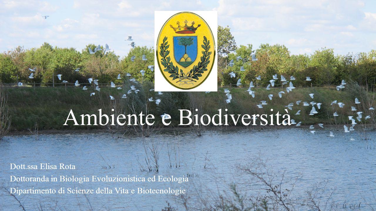 Ambiente e Biodiversità Dott.ssa Elisa Rota Dottoranda in Biologia Evoluzionistica ed Ecologia Dipartimento di Scienze della Vita e Biotecnologie
