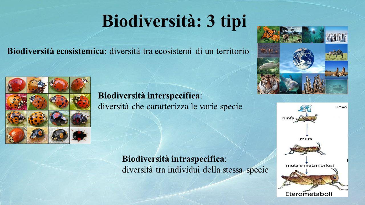 Biodiversità intraspecifica: diversità tra individui della stessa specie Biodiversità: 3 tipi Biodiversità interspecifica: diversità che caratterizza
