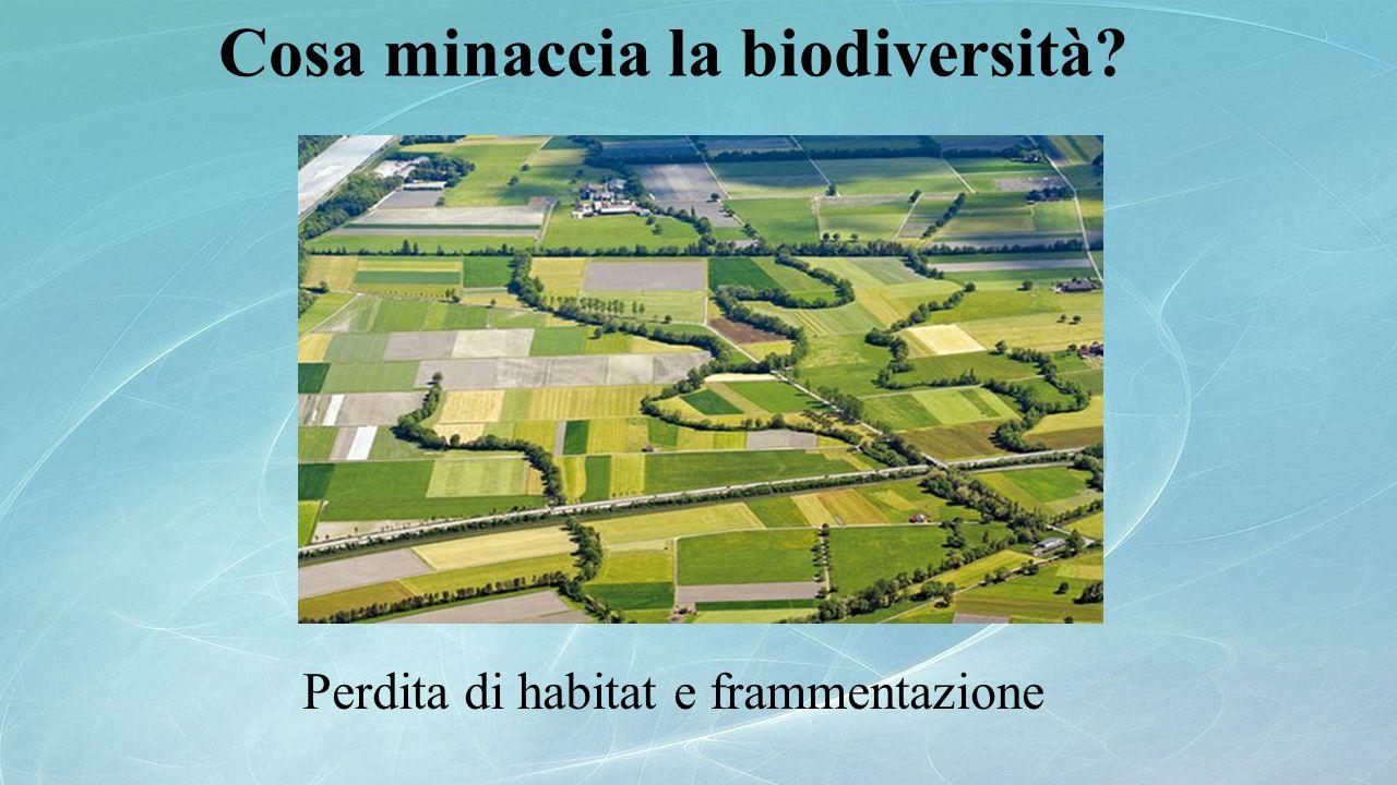 Cosa minaccia la biodiversità? Perdita di habitat e frammentazione
