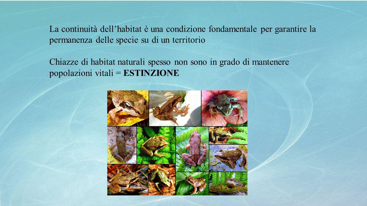 La continuità dell'habitat è una condizione fondamentale per garantire la permanenza delle specie su di un territorio Chiazze di habitat naturali spes