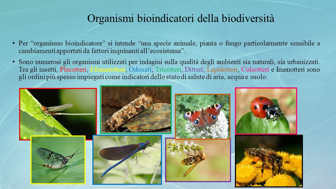 """Organismi bioindicatori della biodiversità Per """"organismo bioindicatore"""" si intende """"una specie animale, pianta o fungo particolarmente sensibile a ca"""