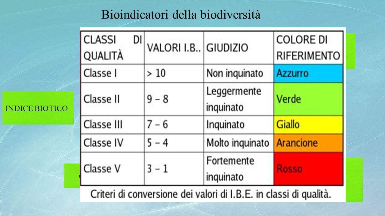 Bioindicatori della biodiversità INDICE BIOTICO definizione applicazione utilità Valutazioni numeriche di qualità delle acque correnti mediante analis