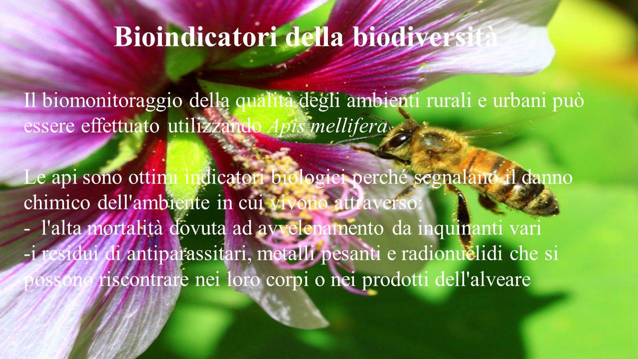 Bioindicatori della biodiversità Il biomonitoraggio della qualità degli ambienti rurali e urbani può essere effettuato utilizzando Apis mellifera Le a