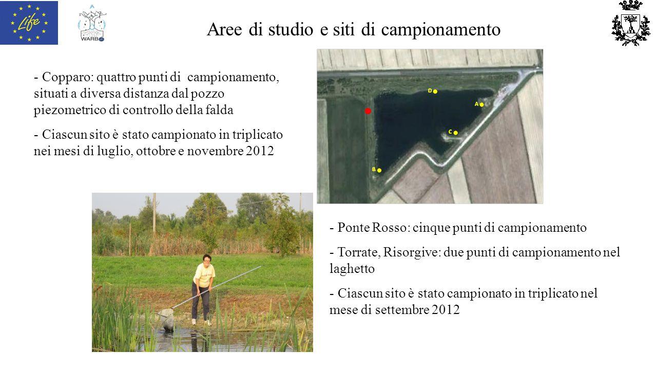 Aree di studio e siti di campionamento - Copparo: quattro punti di campionamento, situati a diversa distanza dal pozzo piezometrico di controllo della