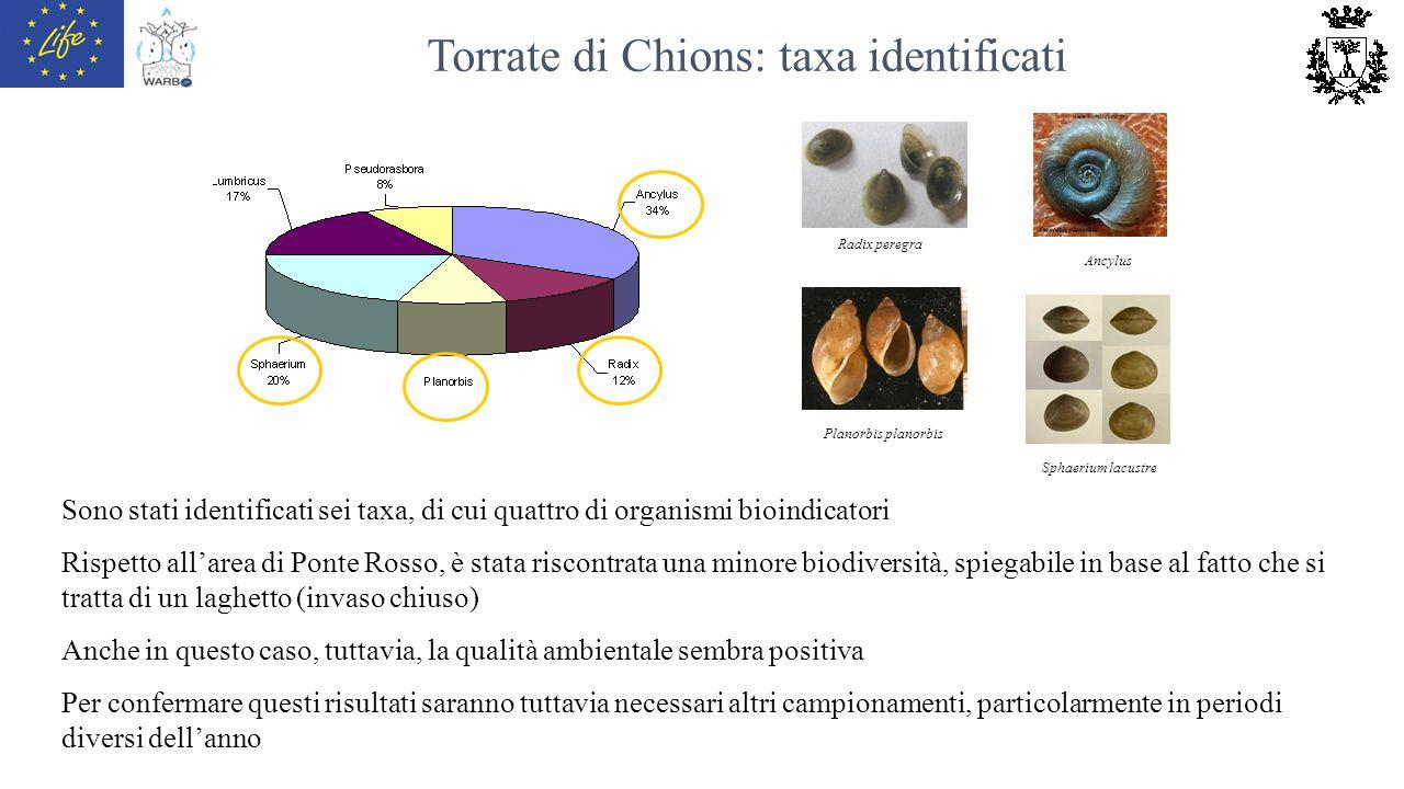 Torrate di Chions: taxa identificati Radix peregra Ancylus Planorbis planorbis Sphaerium lacustre Sono stati identificati sei taxa, di cui quattro di