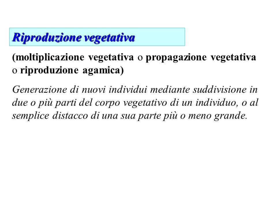 (moltiplicazione vegetativa o propagazione vegetativa o riproduzione agamica) Generazione di nuovi individui mediante suddivisione in due o più parti del corpo vegetativo di un individuo, o al semplice distacco di una sua parte più o meno grande.