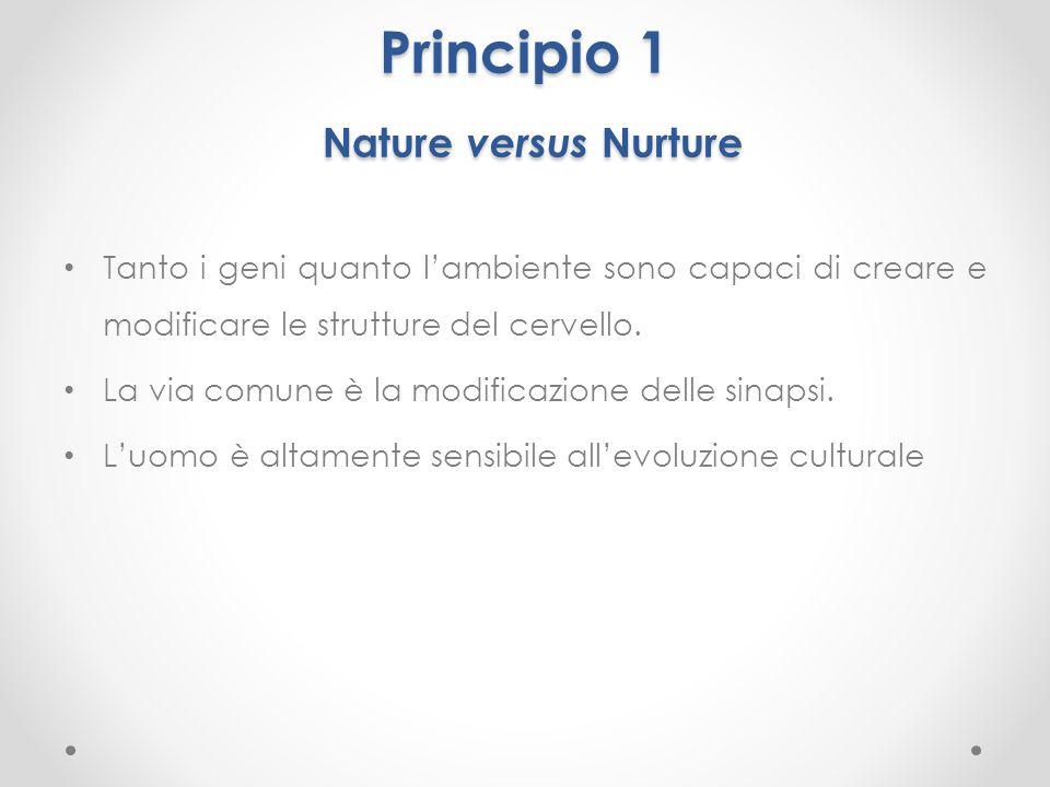 Principio 1 Nature versus Nurture Tanto i geni quanto l'ambiente sono capaci di creare e modificare le strutture del cervello. La via comune è la modi