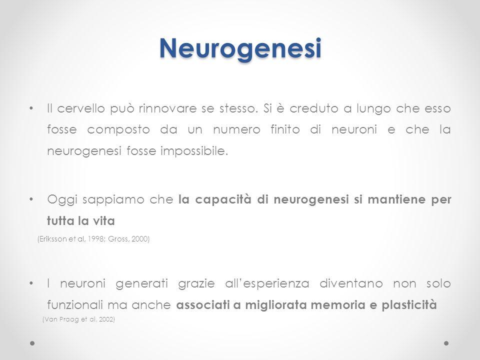 Neurogenesi Il cervello può rinnovare se stesso. Si è creduto a lungo che esso fosse composto da un numero finito di neuroni e che la neurogenesi foss
