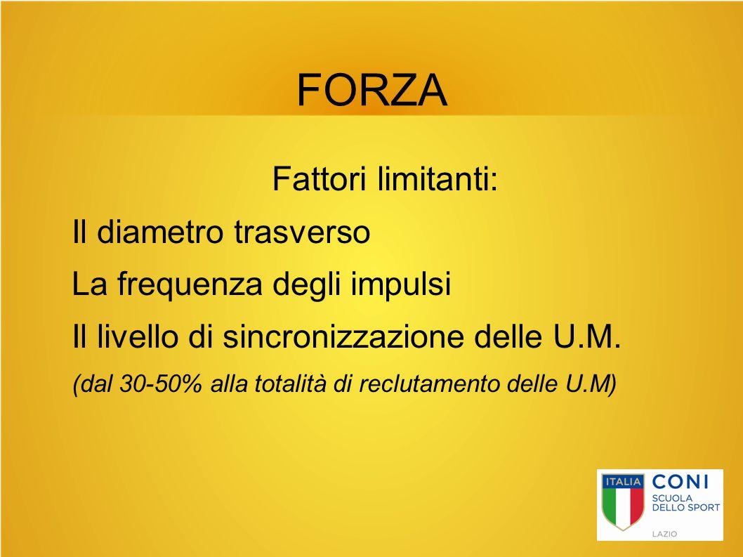 FORZA Fattori limitanti: Il diametro trasverso La frequenza degli impulsi Il livello di sincronizzazione delle U.M. (dal 30-50% alla totalità di reclu