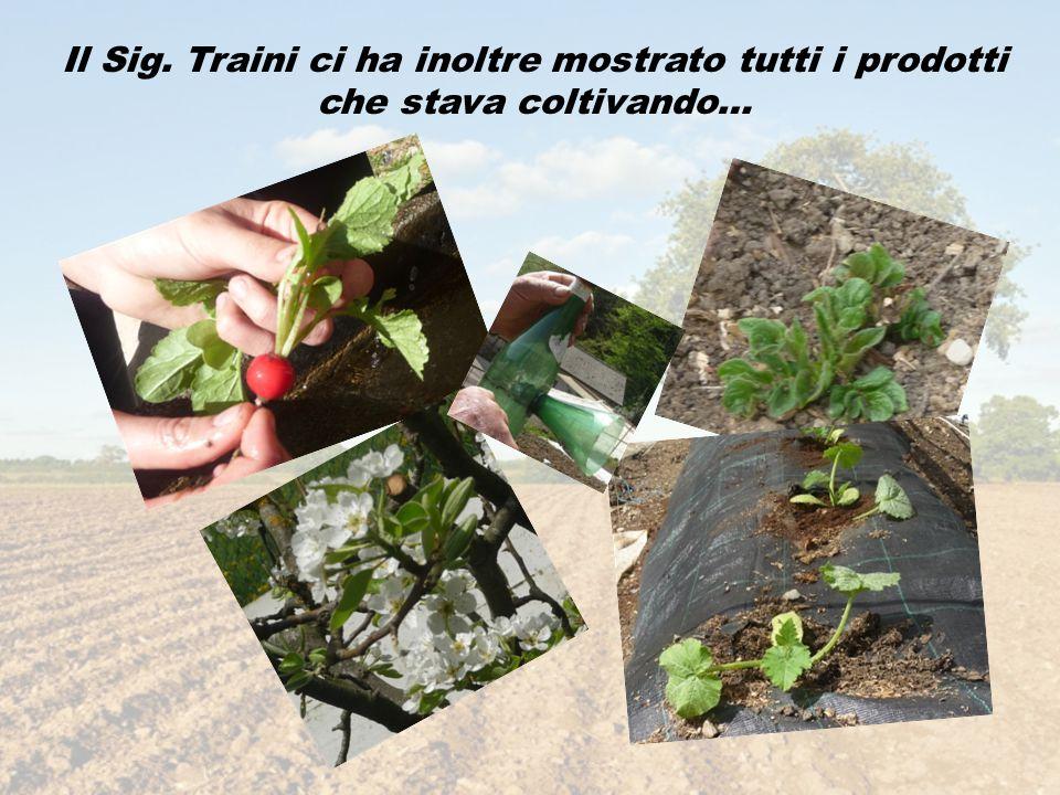 Il Sig. Traini ci ha inoltre mostrato tutti i prodotti che stava coltivando…