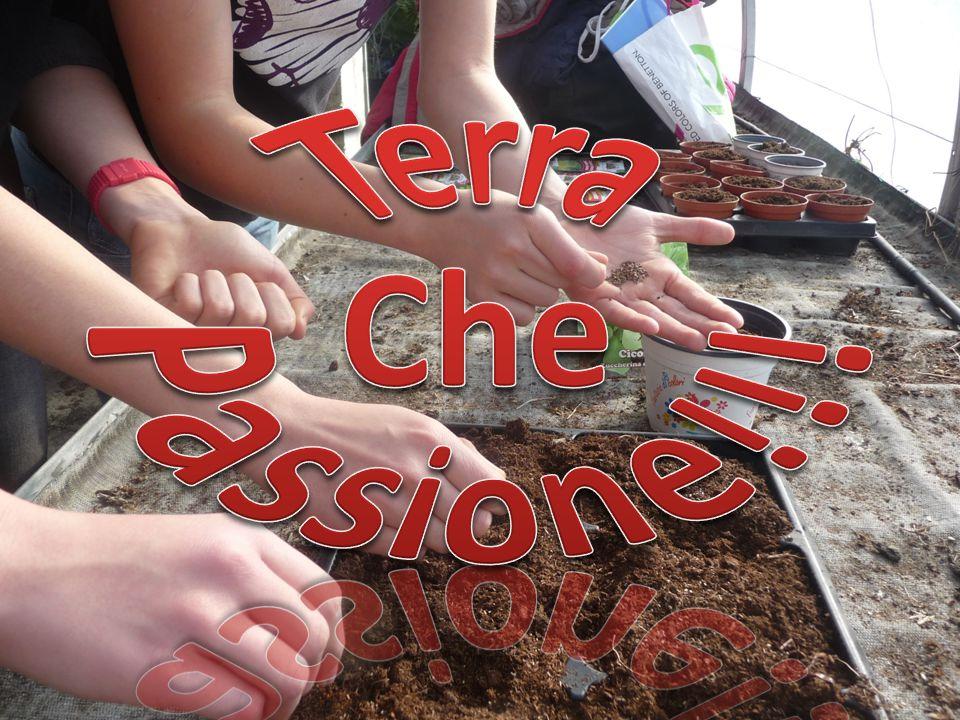 Semina PRODUZIONE PER SEMI Abbiamo messo i semi nel semenzaio ABBIAMO SEMINATO: Aglio Basilico Granoturco Insalata Porro Zucc a … E abbiamo irrigato il tutto…