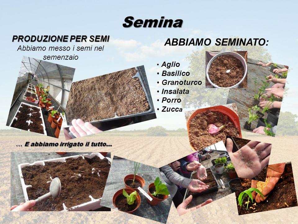 Semina PRODUZIONE PER SEMI Abbiamo messo i semi nel semenzaio ABBIAMO SEMINATO: Aglio Basilico Granoturco Insalata Porro Zucc a … E abbiamo irrigato i
