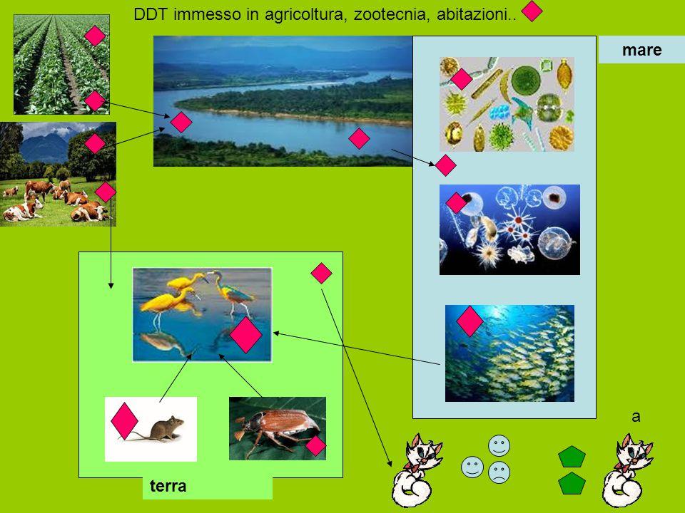 mare terra DDT immesso in agricoltura, zootecnia, abitazioni.. a