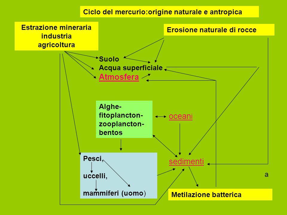 Ciclo del mercurio:origine naturale e antropica Estrazione mineraria industria agricoltura Erosione naturale di rocce Suolo Acqua superficiale Atmosfe
