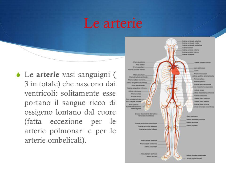 Le arterie  Le arterie vasi sanguigni ( 3 in totale) che nascono dai ventricoli: solitamente esse portano il sangue ricco di ossigeno lontano dal cuo