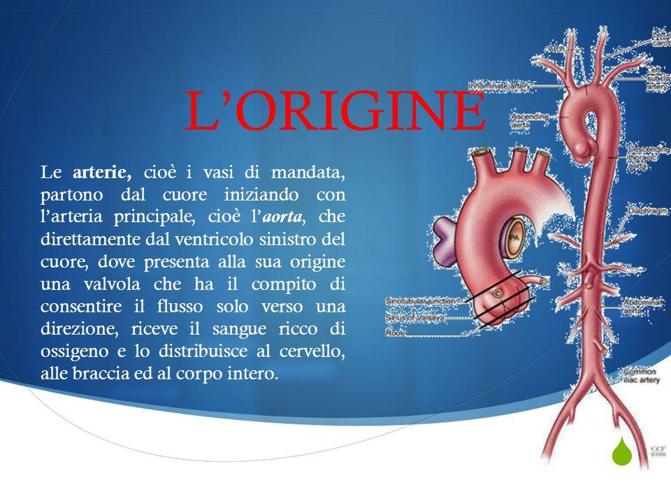  L'ORIGINE Le arterie, cioè i vasi di mandata, partono dal cuore iniziando con l'arteria principale, cioè l'aorta, che direttamente dal ventricolo si