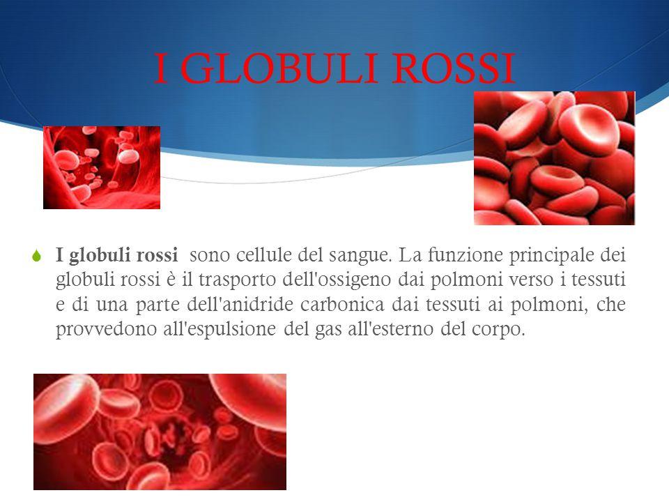 I GLOBULI ROSSI  I globuli rossi sono cellule del sangue. La funzione principale dei globuli rossi è il trasporto dell'ossigeno dai polmoni verso i t
