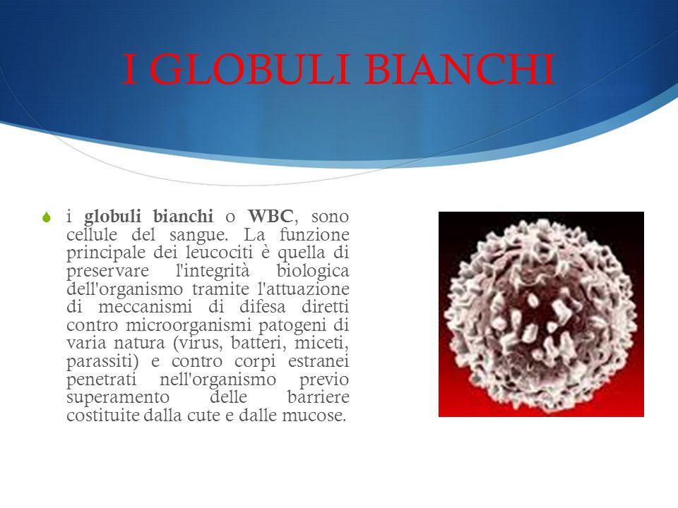 I GLOBULI BIANCHI  i globuli bianchi o WBC, sono cellule del sangue. La funzione principale dei leucociti è quella di preservare l'integrità biologic