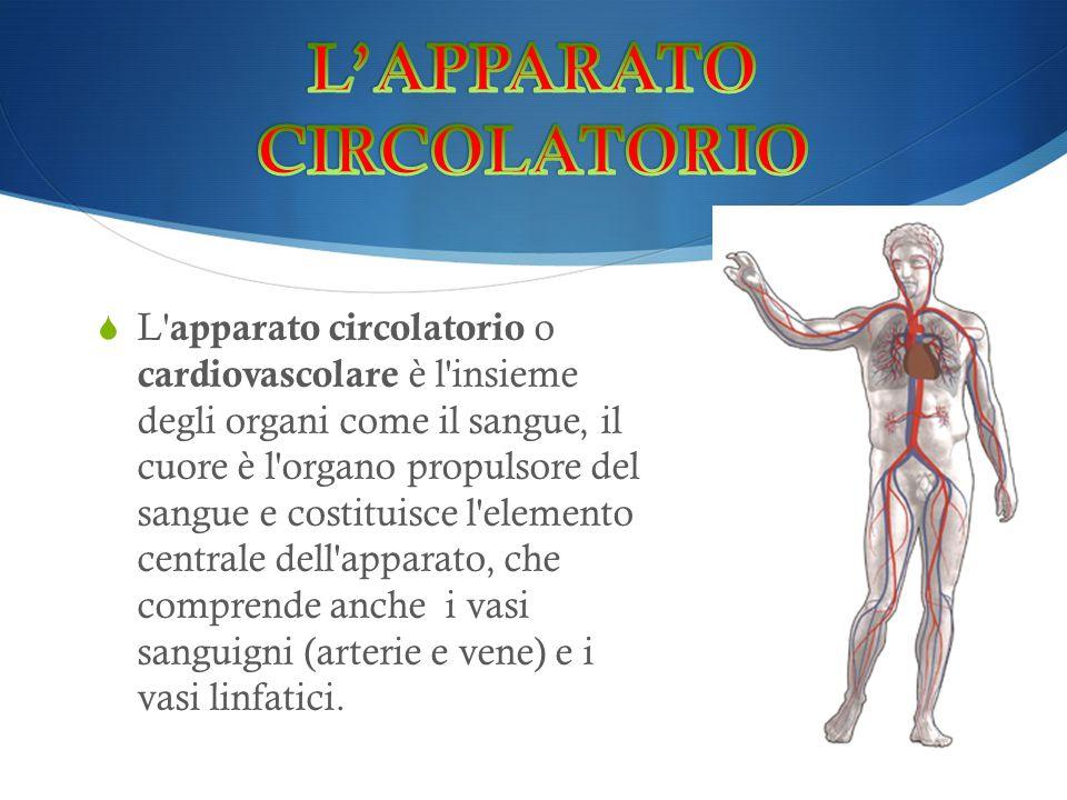  L' apparato circolatorio o cardiovascolare è l'insieme degli organi come il sangue, il cuore è l'organo propulsore del sangue e costituisce l'elemen