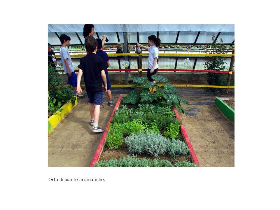 Orto di piante aromatiche.