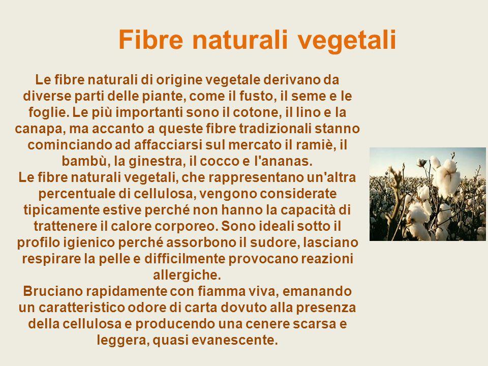 Fibre naturali vegetali Le fibre naturali di origine vegetale derivano da diverse parti delle piante, come il fusto, il seme e le foglie. Le più impor
