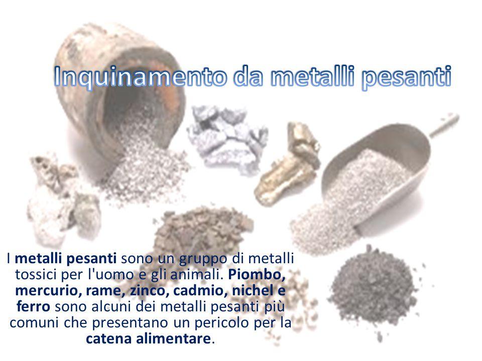 I metalli pesanti sono un gruppo di metalli tossici per l'uomo e gli animali. Piombo, mercurio, rame, zinco, cadmio, nichel e ferro sono alcuni dei me