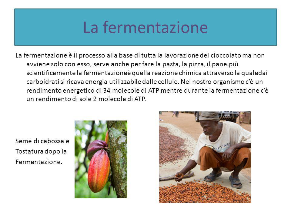 La fermentazione La fermentazione è il processo alla base di tutta la lavorazione del cioccolato ma non avviene solo con esso, serve anche per fare la pasta, la pizza, il pane.più scientificamente la fermentazioneè quella reazione chimica attraverso la qualedai carboidrati si ricava energia utilizzabile dalle cellule.