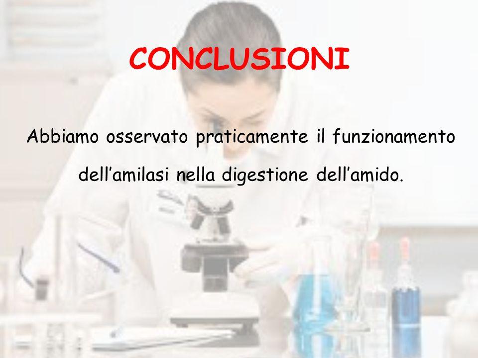 CONCLUSIONI Abbiamo osservato praticamente il funzionamento dell'amilasi nella digestione dell'amido.