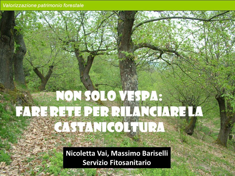 NON SOLO VESPA: FARE RETE PER RILANCIARE LA CASTANICOLTURA Nicoletta Vai, Massimo Bariselli Servizio Fitosanitario Valorizzazione patrimonio forestale