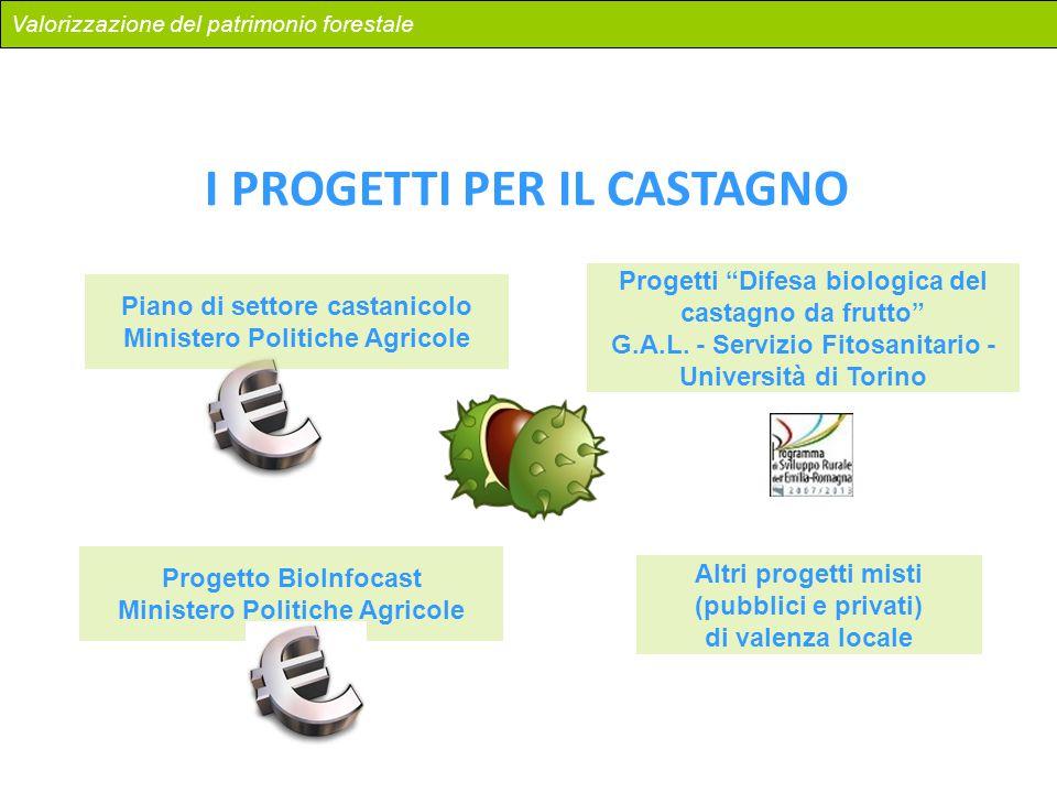 Valorizzazione del patrimonio forestale I PROGETTI PER IL CASTAGNO Piano di settore castanicolo Ministero Politiche Agricole Progetto BioInfocast Mini