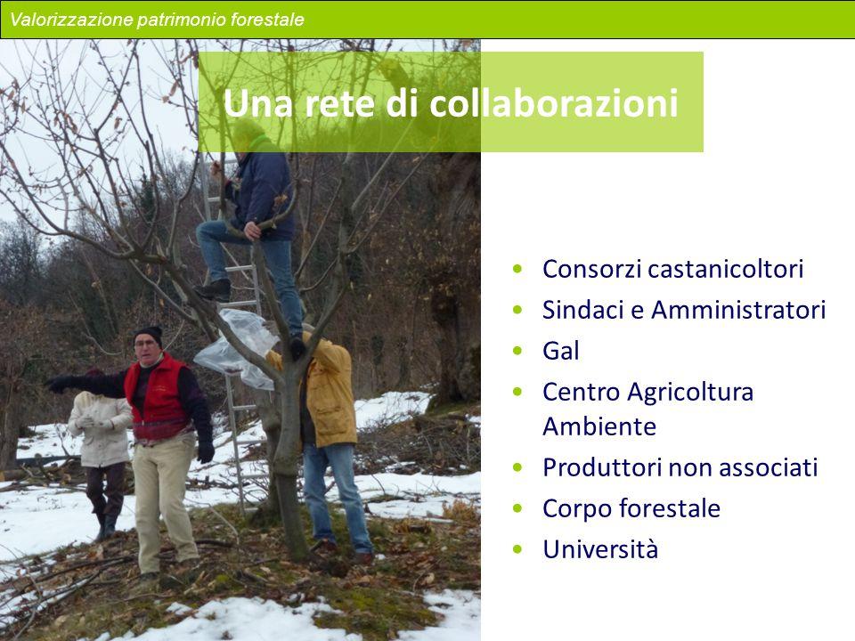 Una rete di collaborazioni Consorzi castanicoltori Sindaci e Amministratori Gal Centro Agricoltura Ambiente Produttori non associati Corpo forestale U