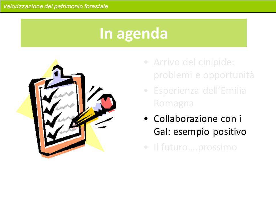 Arrivo del cinipide: problemi e opportunità Esperienza dell'Emilia Romagna Collaborazione con i Gal: esempio positivo Il futuro….prossimo Valorizzazio