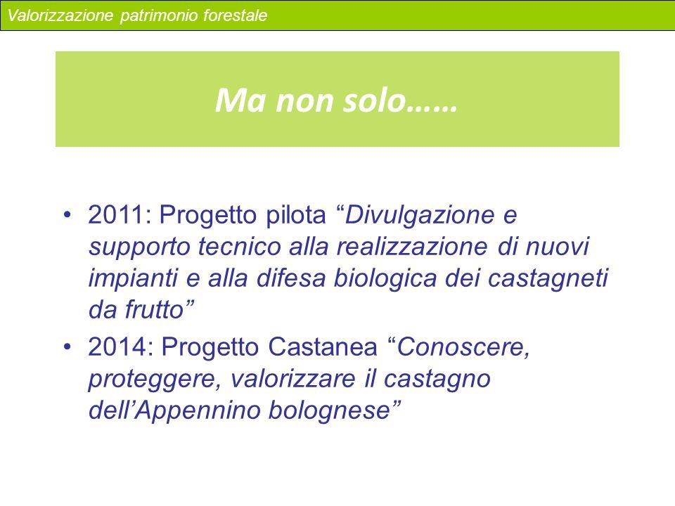 """2011: Progetto pilota """"Divulgazione e supporto tecnico alla realizzazione di nuovi impianti e alla difesa biologica dei castagneti da frutto"""" 2014: Pr"""