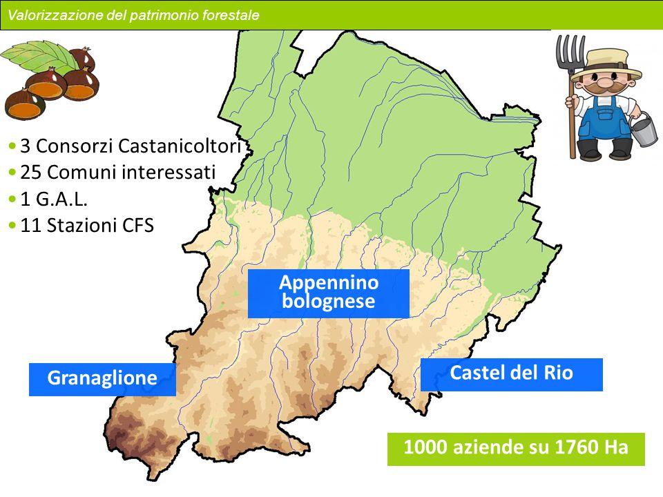 Granaglione Castel del Rio Appennino bolognese 3 Consorzi Castanicoltori 25 Comuni interessati 1 G.A.L. 11 Stazioni CFS Valorizzazione del patrimonio