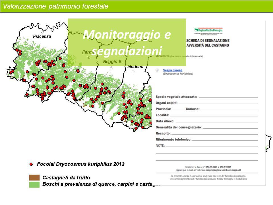 Monitoraggio e segnalazioni Valorizzazione patrimonio forestale