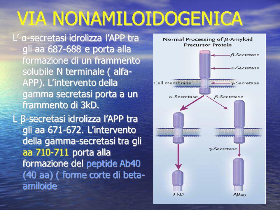 Farmaci interferenti con la formazione di ammassi neurofibrillari (proteina tau) Inibitori delle chinasi : GSK3 ;valproato; litio Inibitori delle chinasi : GSK3 ;valproato; litio Modulatori delle fosfatasi : modulatori PP2A Modulatori delle fosfatasi : modulatori PP2A Inibitori formazione e aggregazione NFT: blu di metilene ( Rember) Inibitori formazione e aggregazione NFT: blu di metilene ( Rember)