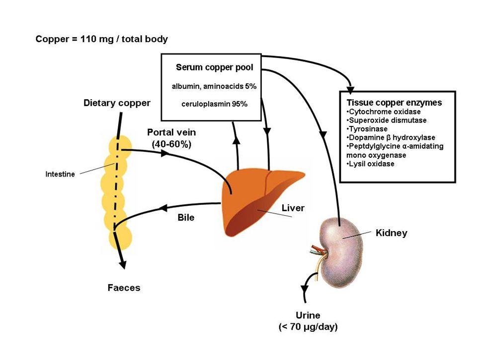 ASSORBIMENTO intestino tenue Identificati due trasportatori: - Ctr-1 che trasporta Cu +1 - DMT-1 o trasportatore di metalli divalenti STEAP 1,2 reduttasi del Cu dCYTB reduttasi (Fe, Cu)