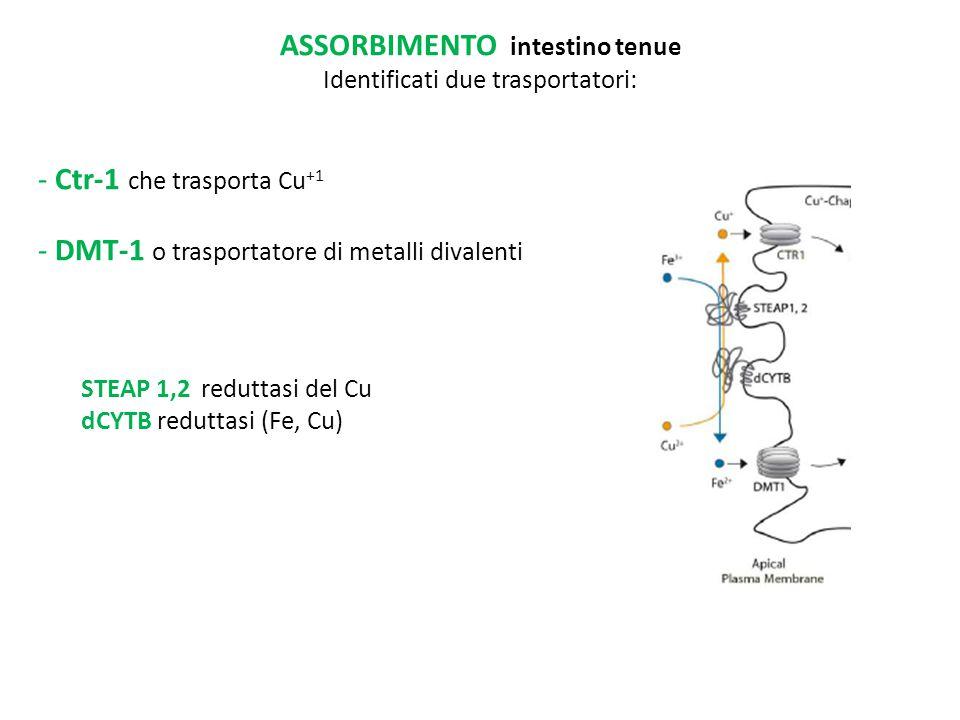 ASSORBIMENTO intestino tenue Identificati due trasportatori: - Ctr-1 che trasporta Cu +1 - DMT-1 o trasportatore di metalli divalenti STEAP 1,2 redutt
