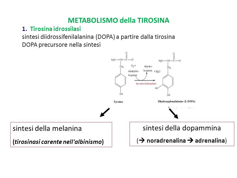 Tirosina Idrossilasi ( tirosinasi,TH) Catalizza la conversione della L-tirosina in L-dopa, che rappresenta la reazione iniziale e rate-limiting della biosintesi delle catecolammine.