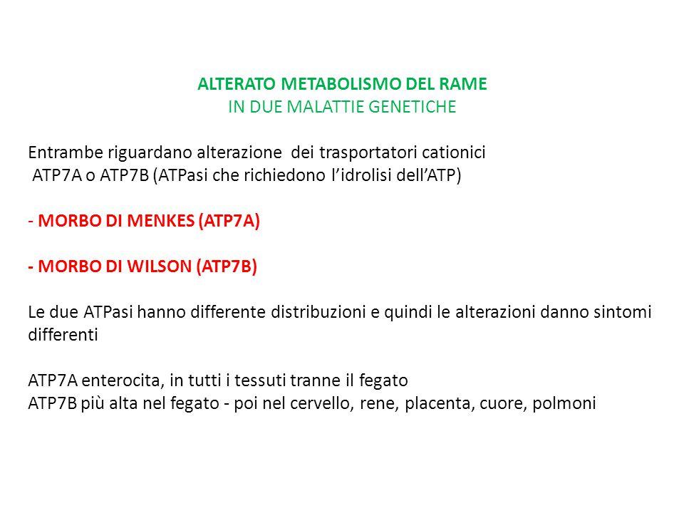 mutazione ATP7B (cromosoma 13) nel morbo di Wilson MALATTIA DA ACCUMULO DI RAME - difetto nella incorporazione di Cu nella ceruloplasmina - incapacità di eliminare il rame con la bile - accumulo di rame nel fegato e cervello e danni epatici e cerebrali da sovraccarico - accumulo anche nella cornea, rene, muscolo, ossa, (1:30.000 –100.000 nati - Sardegna 1:7.000)  terapia chelante  dieto terapia - evitare cibi ricchi in rame (fegato, crostacei, cioccolato, noci, legumi) - non bere acqua con Cu >1ppm (0,1ug/L) - Zn acetato