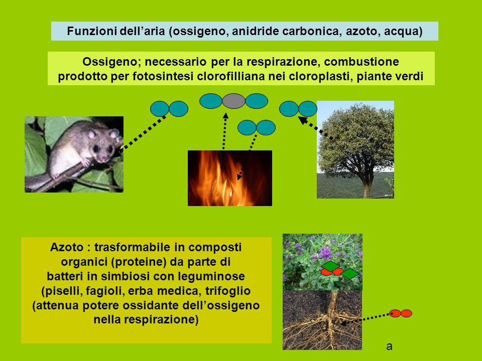 Anidride carbonica: sostanza base per la fotosintesi clorofilliana che la trasforma (con acqua ed energia solare) in composti glucidici (prodotta nelle combustioni, respirazione, attività vulcanica) partecipa alla termoregolaziome atmosferica (effetto serra) Vapore acqueo:partecipa a varie reazioni chimiche, responsabile della umidità atmosferica, condiziona fenomeni meteorologici e biologici vari H2O CO2 O2 glucidi O2 CO2 a