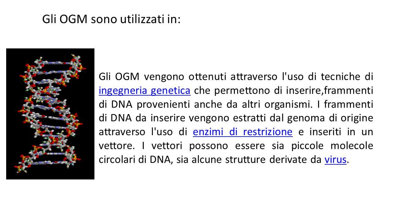 Gli OGM vengono ottenuti attraverso l'uso di tecniche di ingegneria genetica che permettono di inserire,frammenti di DNA provenienti anche da altri or