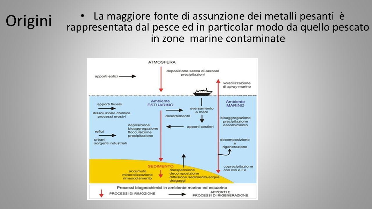Origini La maggiore fonte di assunzione dei metalli pesanti è rappresentata dal pesce ed in particolar modo da quello pescato in zone marine contaminate